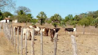 Homem é preso acusado de usar caminhão e roubar 24 vacas no interior da Paraíba