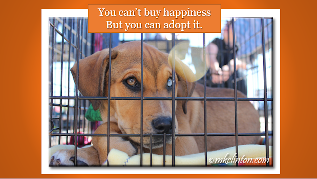 "Shelter dog with You can't buy happiness but you can adopt it"" quote"