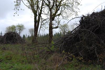 apple trees cut down