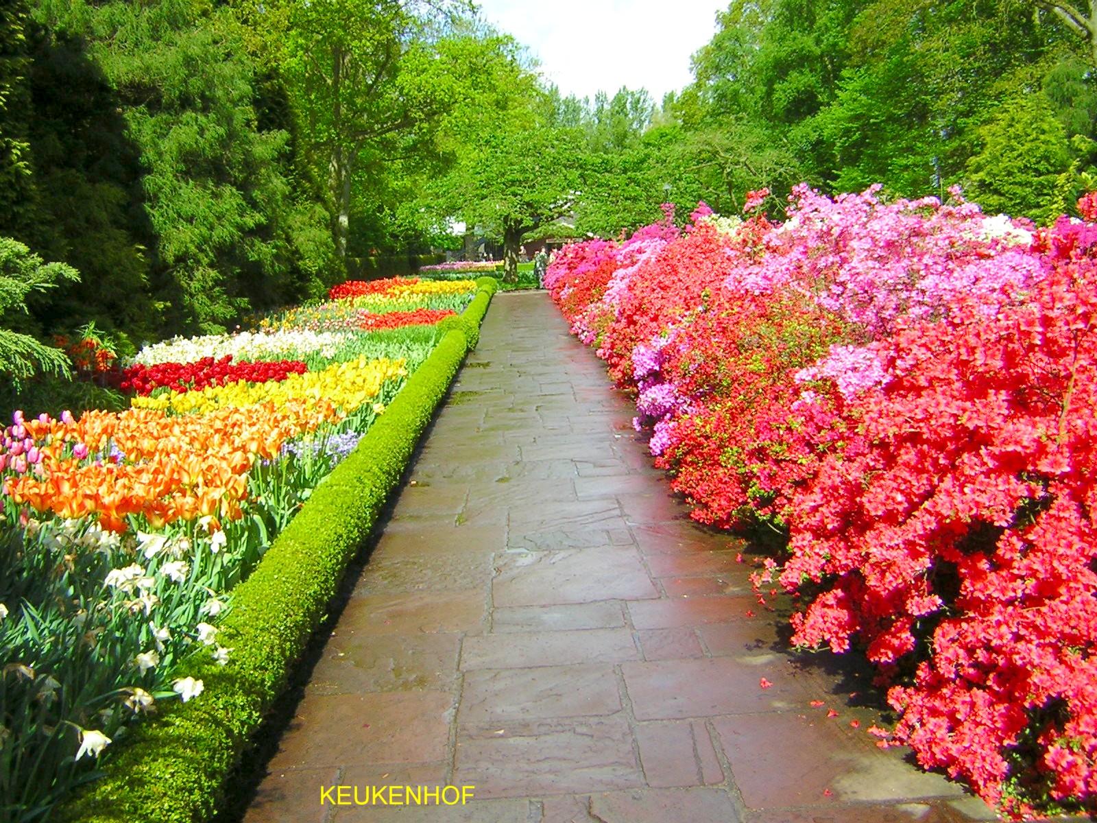 Bikiniworld il linguaggio dei fiori for Giardino con fiori
