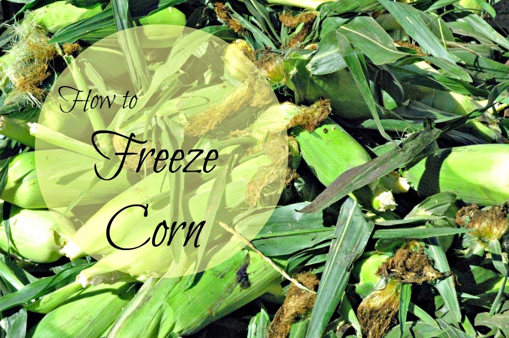 Whether you prefer kernel corn or corn on the cob, the process of freezing it is the same.