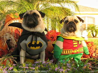 Batman and Robin on patrol.