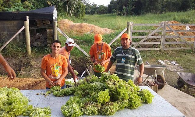 Estudantes da Ilha recebem hortaliças frescas diariamente na merenda escolar
