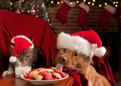 Christmas Foods NOT to Feed Your Pet