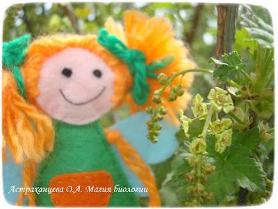фенофазы, феечка, наблюдения весны, смородина цветет, зеленый