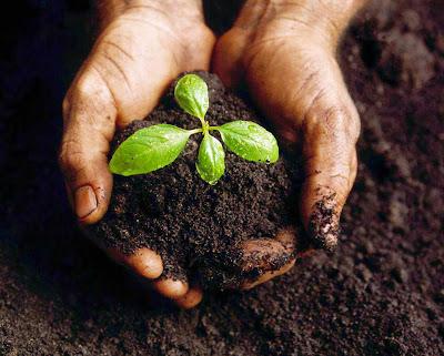 Memperbaiki tanah dengan Pupuk Organik