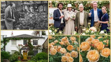 La historia detrás de la Rosa Roald Dahl