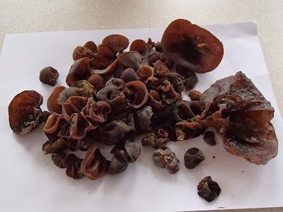 grzyby 2017, grzyby w marcu, zimowe grzyby wiosną, Auricularia auricula-judae uszak bzowy, Flammulina velutipes płomiennica zimowa, Tremella mesenterica trzęsak pomarańczowożółty
