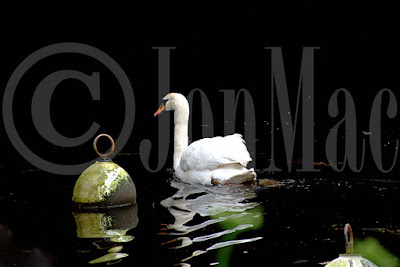 swan-at-totnes.swan