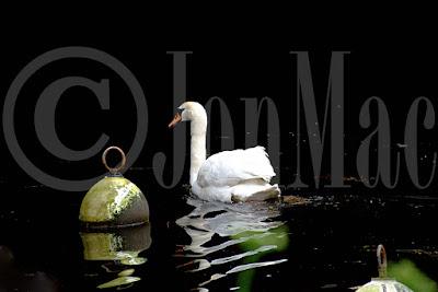 swan-at-totnes.swan