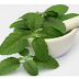 Women in Pregnancy Surely the use of Basil leaves, and its benefits