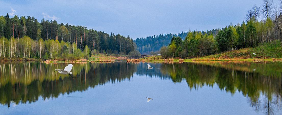 Цапли над водой, Пермский край