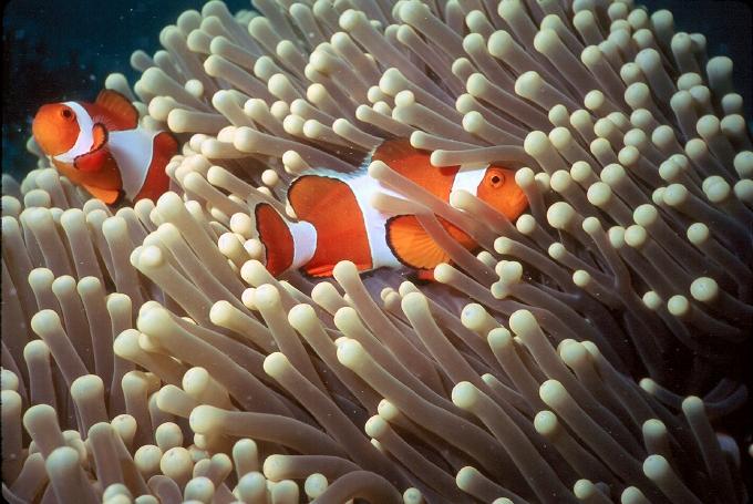 1001 Wallpaper Gambar Pemandangan Bawah Laut