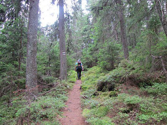 Końcówka leśnego podejścia.