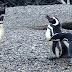 Πιγκουίνος πιάνει την γυναίκα του με άλλον: Το ξύλο που ακολούθησε δεν υπάρχει