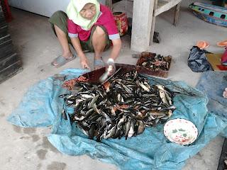 Salai Ikan Keli