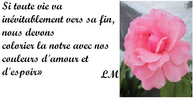 Jolies Citations Bon Mercredi