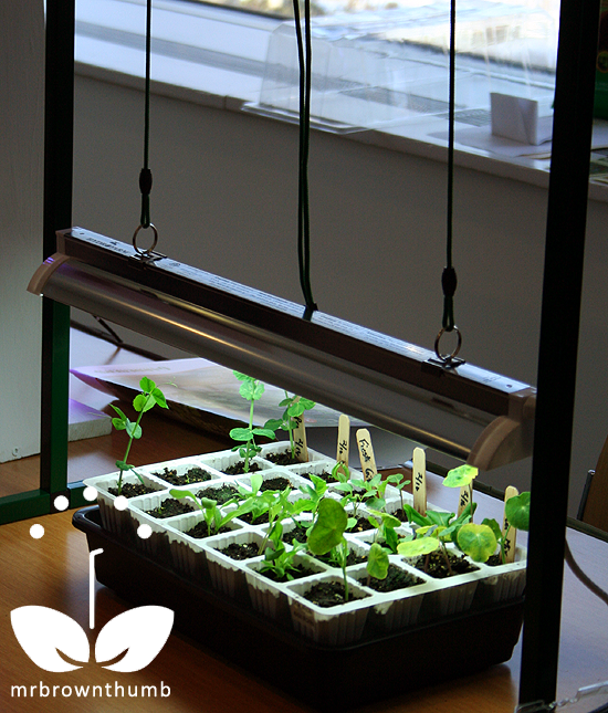 Grow Lights for Indoor Seed Starting : MrBrownThumb