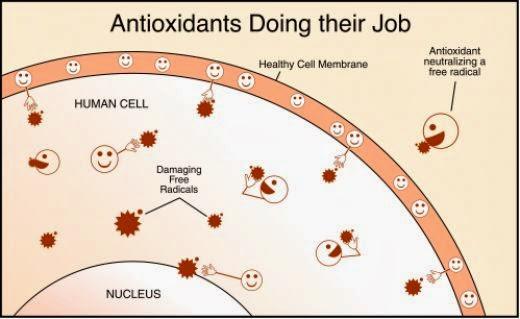 antioksidan melawan radikal bebas daripada merosakkan sel tubuh
