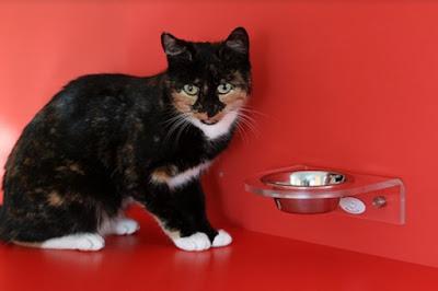 10 Cara Merawat Kucing