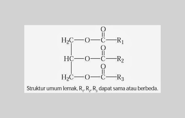 Struktur Kimia Lemak R1, R2, R3