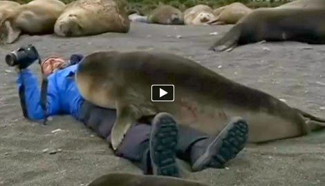 Cameraman Has A Wonderful Experience With A Seal