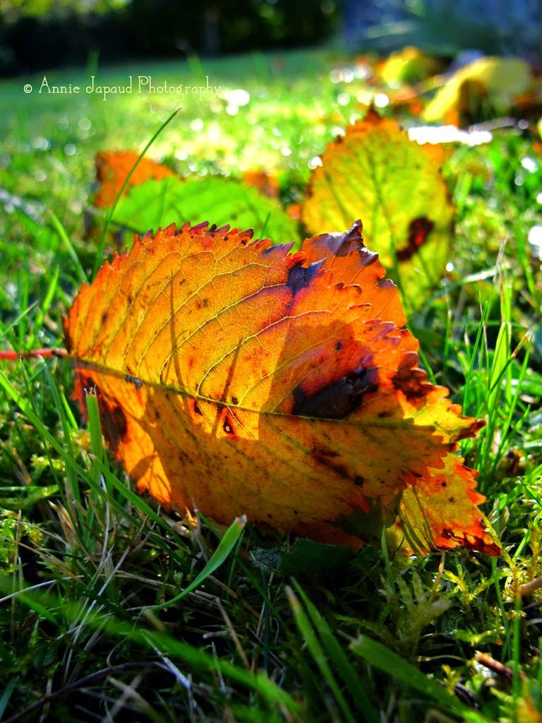 fallen leaves on the grass