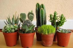 Pengertian Tumbuhan Kaktus Lengkap dengan Jenis dan Manfaatnya Bagi Manusia