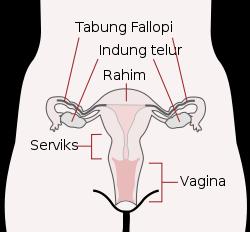 gejala hamil diluar kandungan