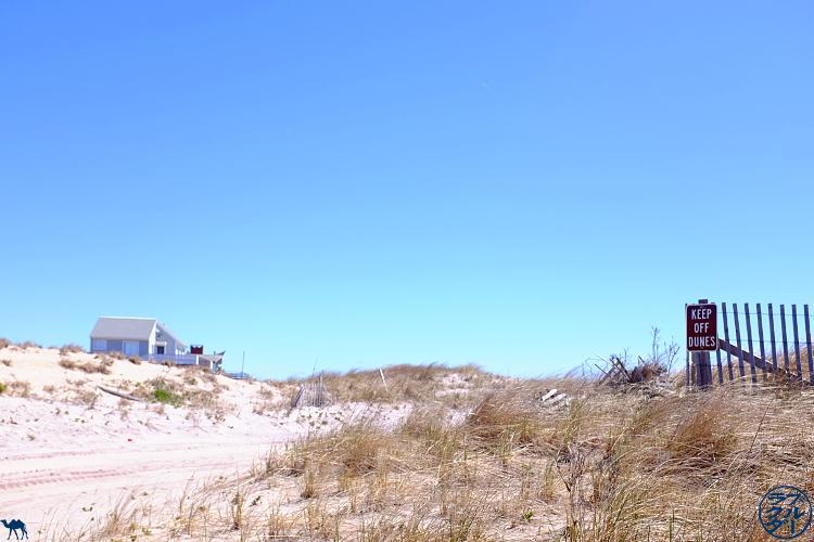 Le Chameau Bleu - Dunes de Fire Island - Séjour à Long Island New York