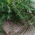 Kebaikan Herba Thyme Dalam Perubatan Tradisional