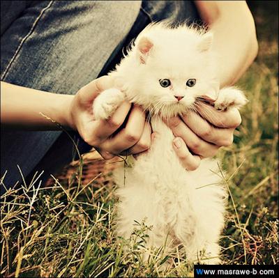 صور صور قطط كيوت 2020 خلفيات قطط جميلة جدا cats44.png