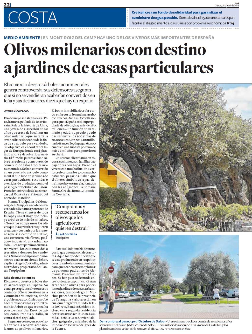 Godall blog olivos milenarios con destino a jardines for Jardines de casas particulares