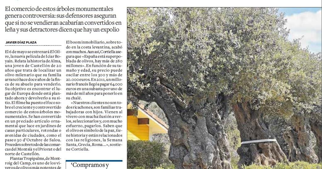Godall blog olivos milenarios con destino a jardines - Jardines de casas particulares ...