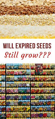 Expired seeds can grow
