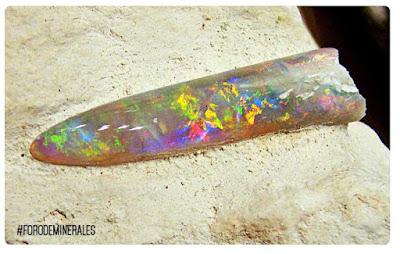 opalo coober pedy belemnite opalizado fosil | foro de minerales