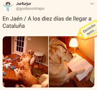 perros, Jaén, Cataluña, cartas, libro
