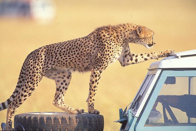Safari-Holidays-to-Kenya