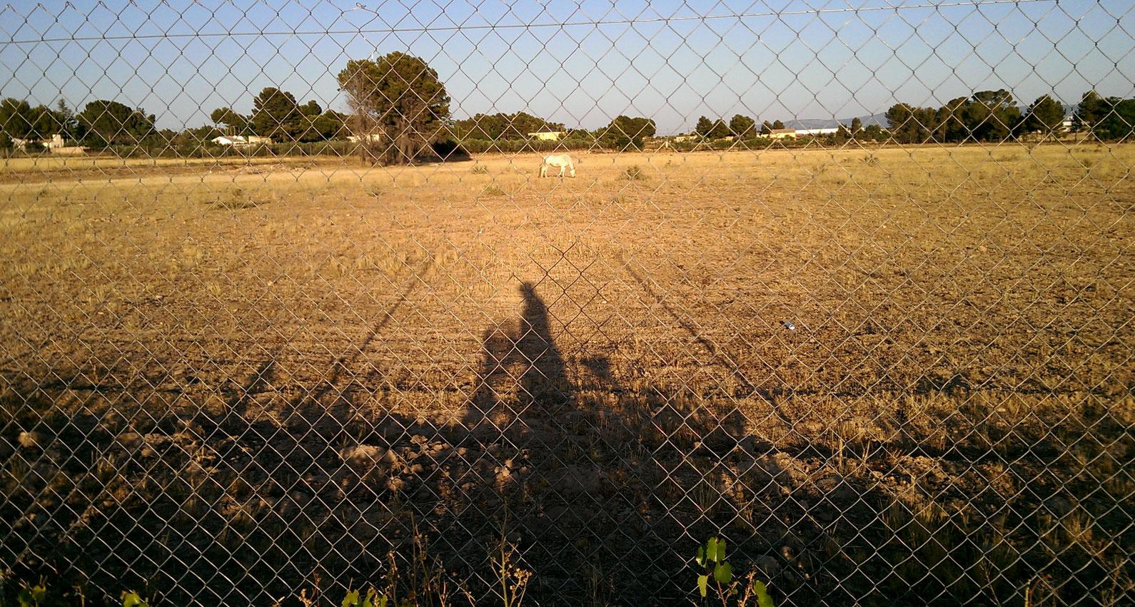 Yecla, Senda de los Jinetes, julio 2016