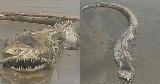 Τρομακτικό πλάσμα με περίεργα δόντια ξεβράστηκε σε παραλία στο Μεξικό