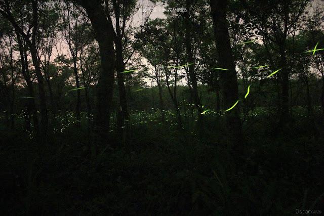 大農大富平地森林園區-4