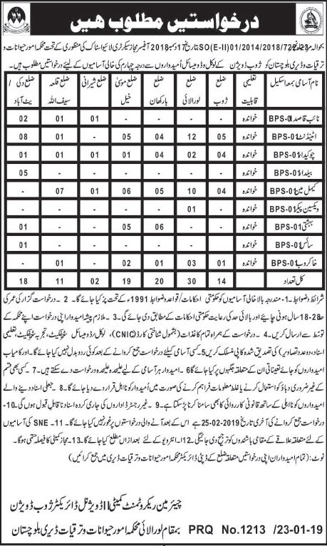 livestock and dairy development department,livestock and dairy department jobs 2019,livestock and dairy,livestock and dairy department jobs in pakistan,livestock,livestock & dairy development department punjab,livestock and dairy development department loralai in jobs 2019,jobs in livestock and dairy department 2019,balochistan livestock and dairy development jobs 2019,livestock and dairy development