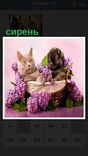 в корзинке лежат два кота и вокруг них ветки сирени