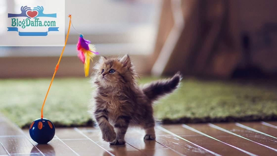 Cara Melatih Kucing Bermain Lempar Tangkap
