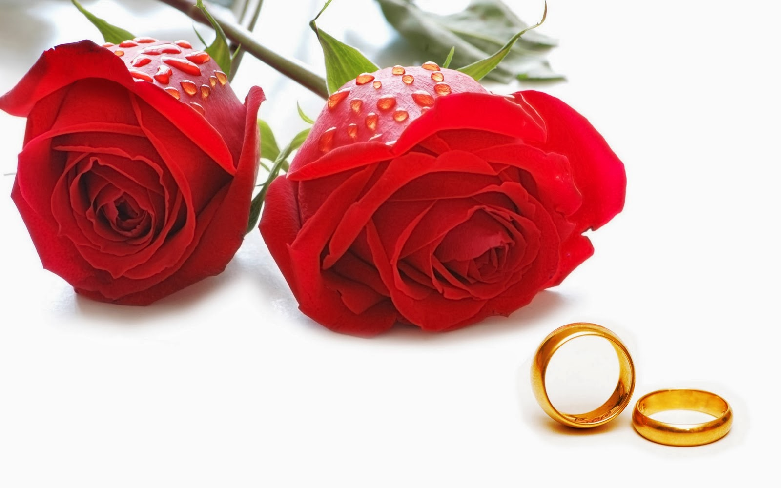 Red Rose With Marriage Rings Valentines Day Pictures