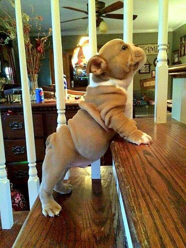 Cute dogs - part 161, funny dog pics, cute dog images, dog photo