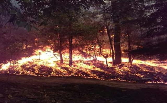 Incendios, fuego, árboles
