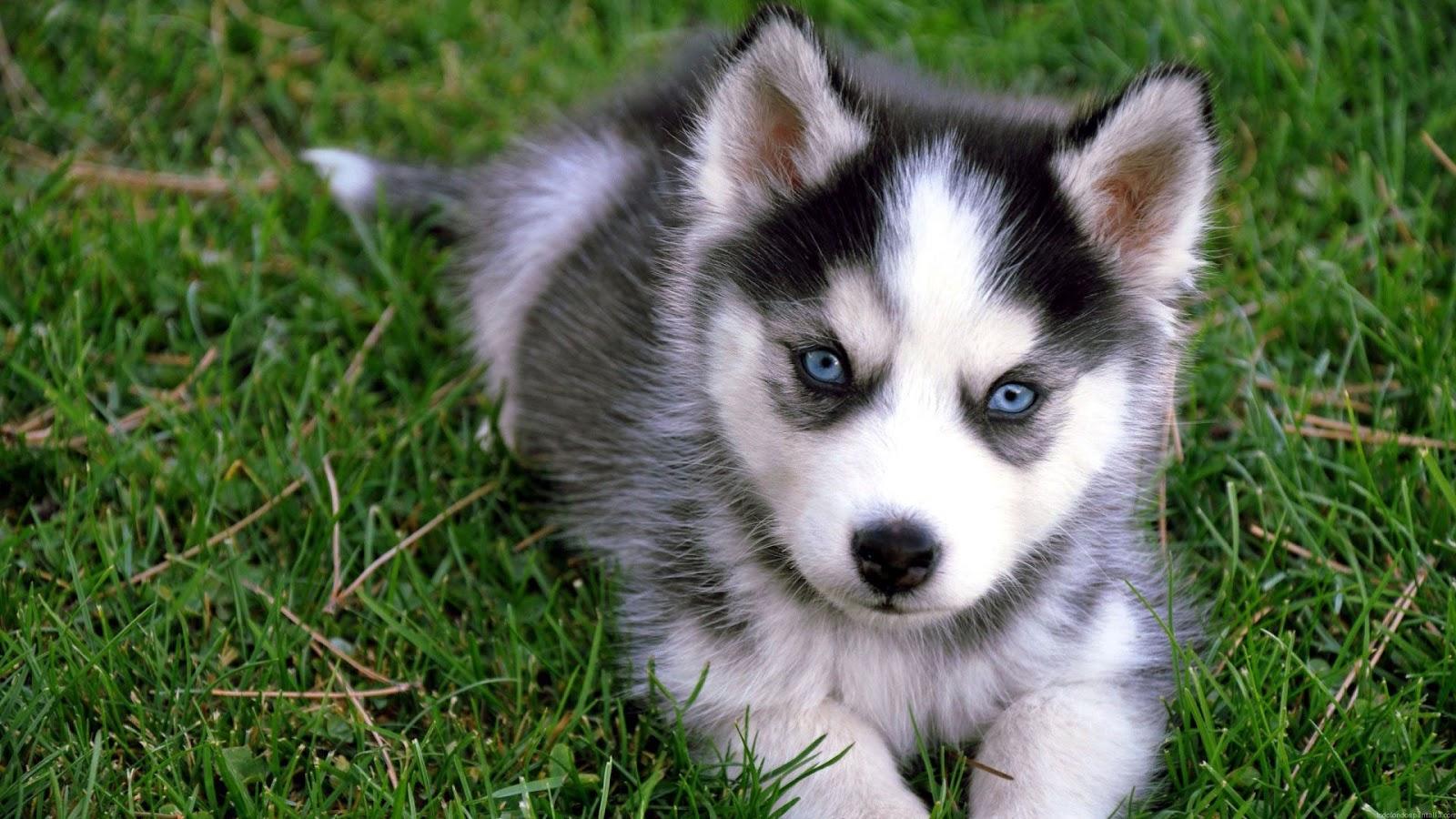 Fondos De Animales Animados: Fondo De Pantalla Perros 1920x1080