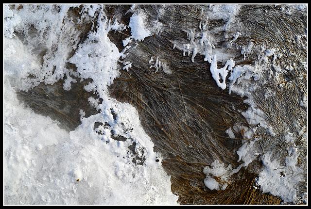 Risser's Beach; Nova Scotia; Snow; Ice; Marsh Grass