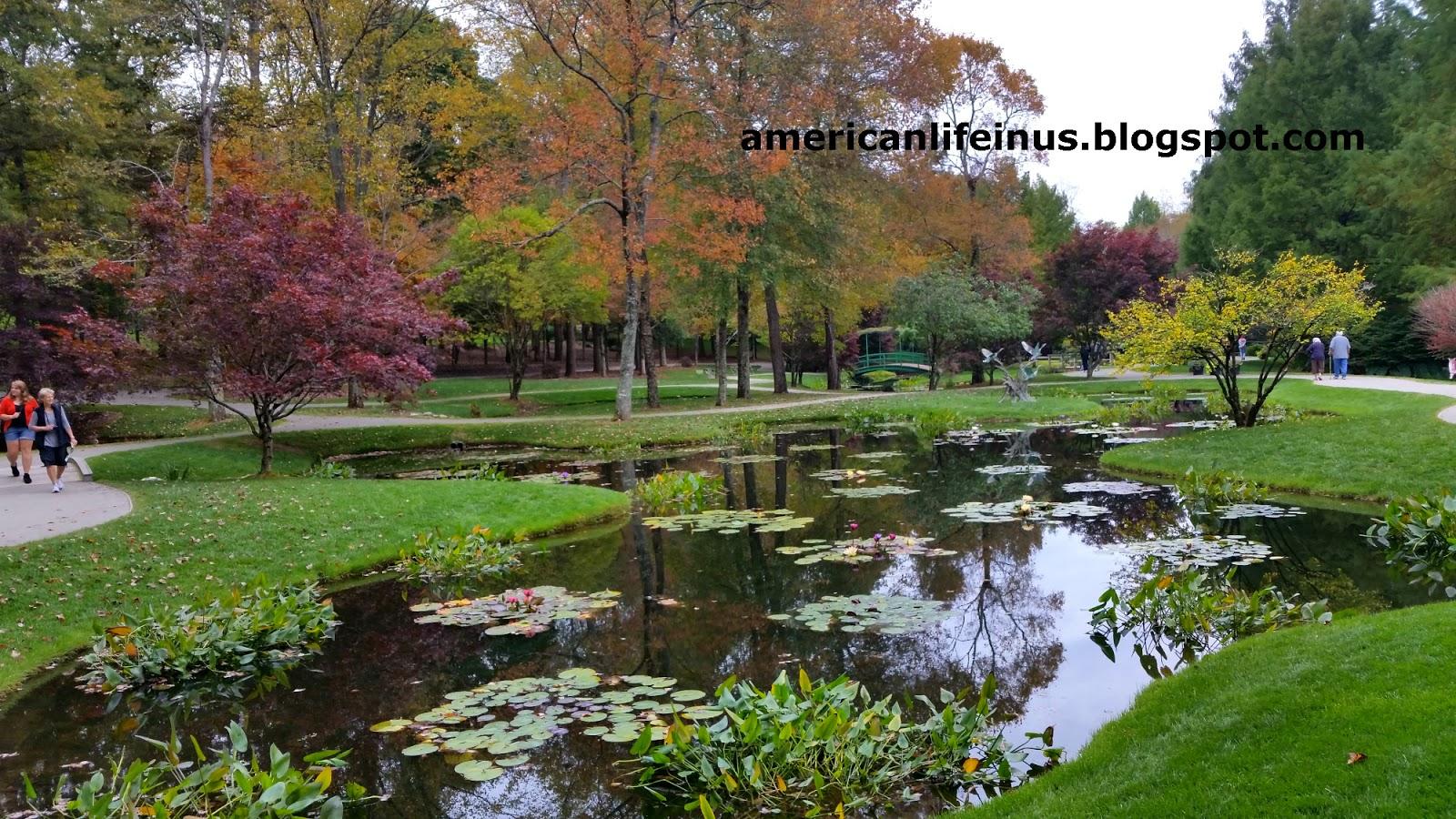 Обои цветы, сша, кусты, ball ground gibbs gardens. Природа foto 17